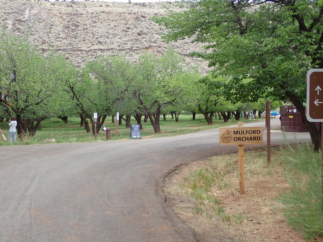 Fruita Campgrounds, Capitol Reef National Park