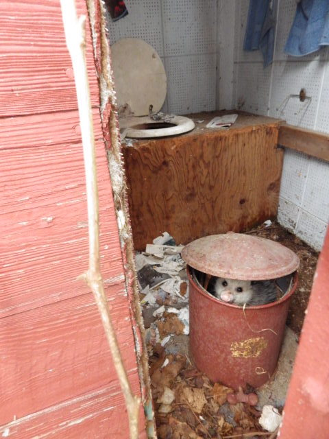 Opossum in Lye Can in Outhouse